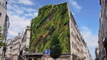 L'Oasis d'Aboukir, il nuovo capolavoro 'verde' di Patrick Blanc