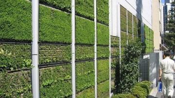 Un percorso formativo sull'architettura vegetale
