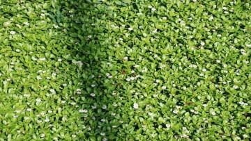 La Lombardia 'scommette' sui tetti verdi