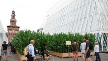 Expo 2015, arriva il campo di mais davanti al Castello Sforzesco