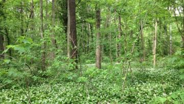 In Lombardia arriva il catasto delle foreste urbane