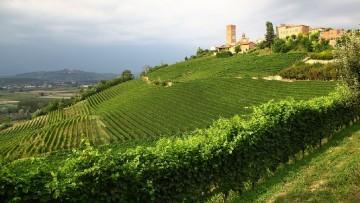 Langhe-Roero e Monferrato nominati dall'Unesco Patrimonio dell'umanita'