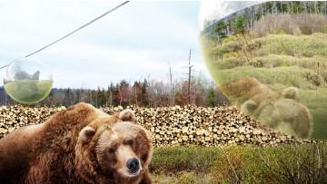 Lo zoo senza gabbie firmato Big