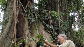 Bioenergetic landscapes: lo studio bioenergetico degli alberi