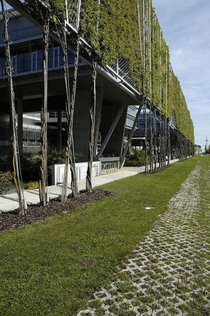Attacco a terra, coi fusti delle piante coadiuvati nel loro sviluppo dai montanti metallici verticali