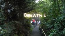 Le foreste urbane di Expo 2015: il nostro reportage