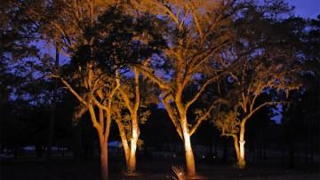Progettare giardini e terrazze: come illuminare gli alberi