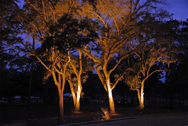 illuminazione_alberi