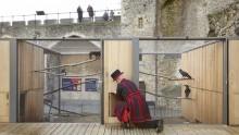 Una nuova casa in legno per i corvi della Torre di Londra