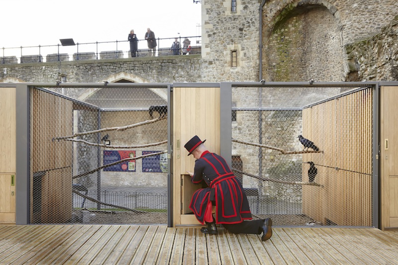 Una nuova casa in legno per i corvi della torre di londra for Una pianta della casa di legno