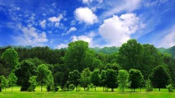 Bioenergetic Landscapes: le influenze degli alberi sulla biosfera