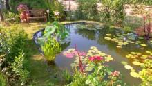 Scegliere le piante acquatiche per progettare specchi d'acqua