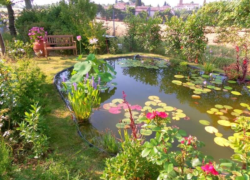 Scegliere le piante acquatiche per progettare specchi d for Laghetti nei giardini