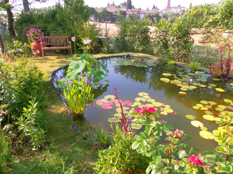 Scegliere le piante acquatiche per progettare specchi d for Pesci finti per piscina
