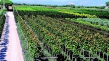 La guida del vivaista alla scelta della piante per il verde in città
