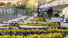 Tetti verdi per un modello urbano resiliente: l'esperienza dei Paesi Bassi a ROOFdinners