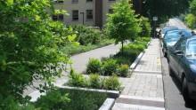 A che cosa serve il Piano del Verde Urbano?