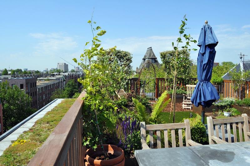 Il tetto verde raccontato da chi lo fa intervista agli - Giardino sul tetto ...