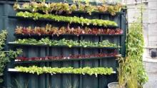 Come realizzare e coltivare un orto in facciata