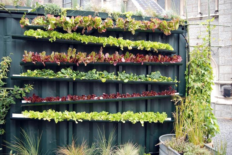 Esempio di orto verticale autocostruito. Il sistema generale per coltivare in verticale è tutto sommato semplice. Mediante l'impiego di alcune lamiere adeguatamente sagomate, in opera con pochi tasselli, è stato ricavato uno spazio di coltivazione sulla parete verticale di un cortile urbano privato. Nell'immagine è visibile il tubo verticale per l'irrigazione: l'acqua viene irrorata dall'alto e discende sfruttando le pendenze delle lamiere, così da raggiungere in successione tutte le piante © Blaine O'Neill