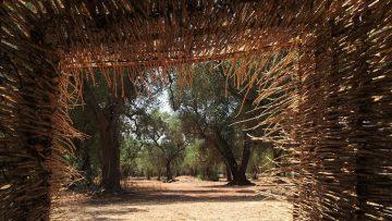 Rigenerazione del territorio in Biennale: il Parco dei Paduli