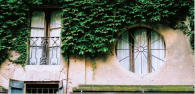 Minelli 3_FIG 1_Il cuscino verde formato dal rampicante su una parete (Foto Simona Bocedi)