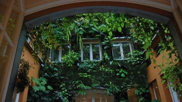 Realizzare una parete verde e scegliere i rampicanti: la guida dell'agronomo
