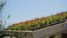Progettazione del verde pensile: un corso con crediti a Brescia
