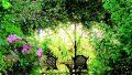 Guida al progetto di giardino bioenergetico per ospedali e centri benessere
