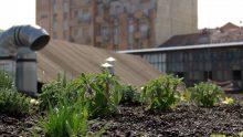 I tetti verdi al centro del Milano Design Film Festival