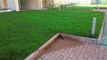 Verde pensile estremo: come scegliere i substrati