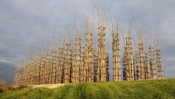 Art in Nature: la Cattedrale Vegetale di Giuliano Mauri a Lodi