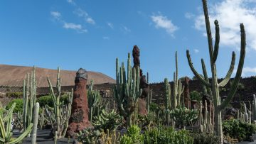 Il Premio Scarpa 2017 al Giardino dei Cactus di Lanzarote