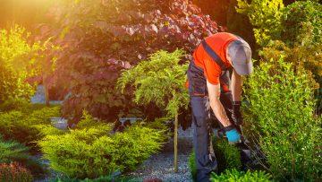 Professione manutentore del verde: il nuovo standard