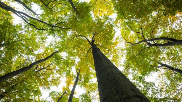 Alberi o arbusti? La definizione del trattato di botanica forestale