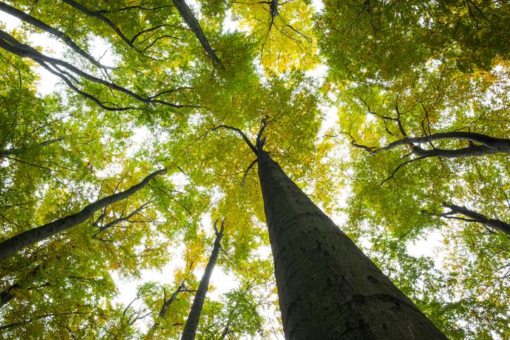 foreste-alberi